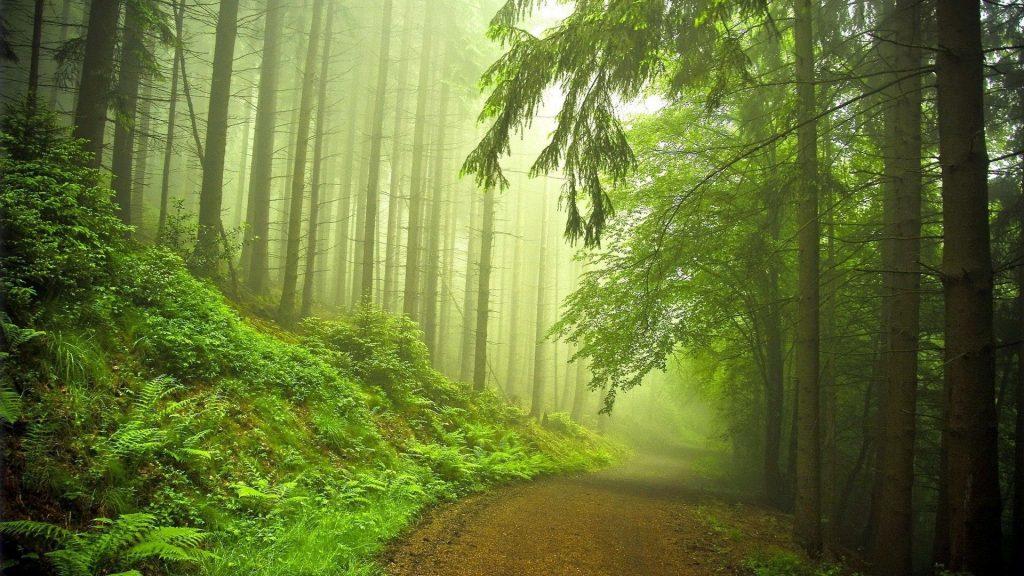 Тихий лес бесплатно