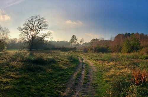 Forest Bathing - A Walk on the Wild Side