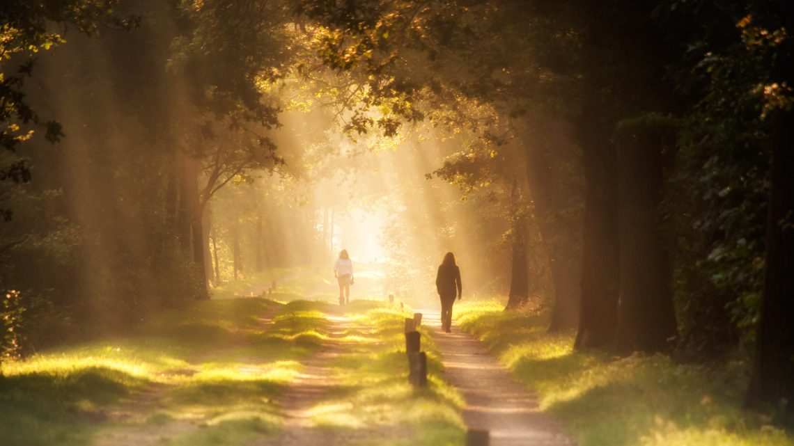 Sunlight through trees illuminating walkers on a path