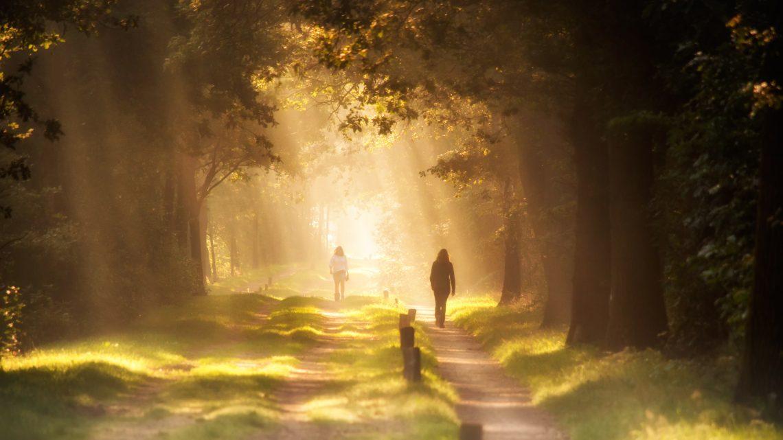 Sunlight through trees illuminating walkers on a path