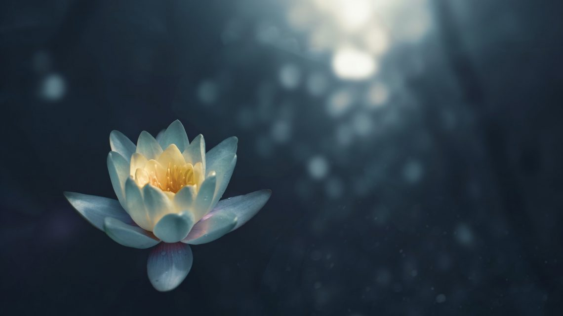 Lotus Blossom on Water